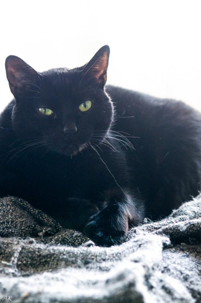 My Cat Calypso | aberdeenskitchen.com