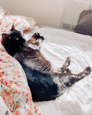 Life in Self Quarantine Calypso black cat on bed with flower blanket in the sun