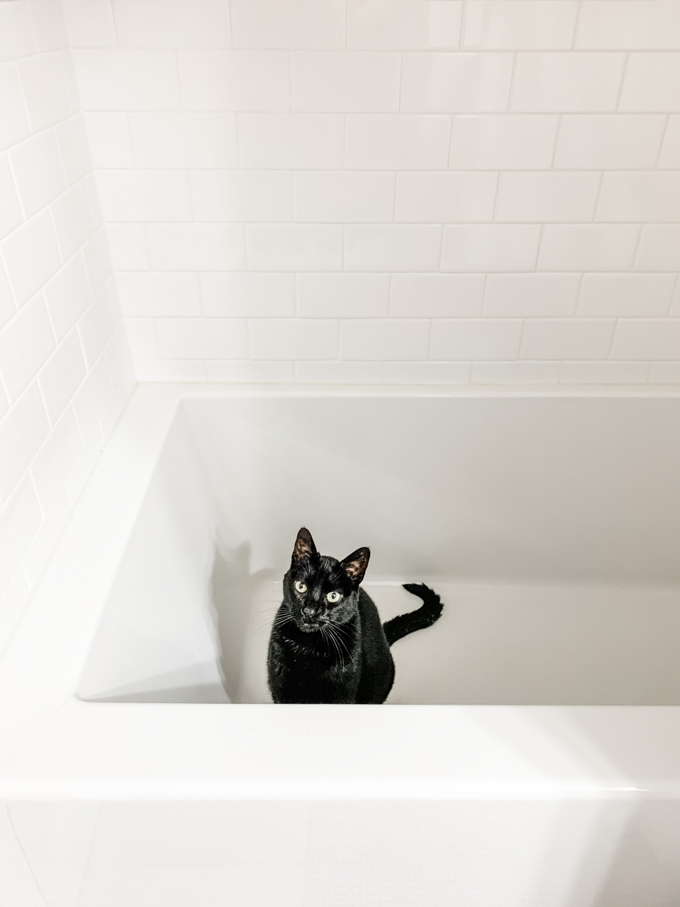 Happy Holidays! (Out of the Kitchen) black cat in white bath tub with white tile surround